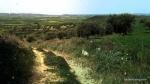 Oliveto Franca a Villanovafranca, Sardegna