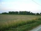 STRA Frazione S. Pietro campi agricoli